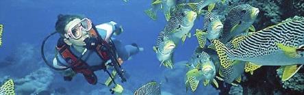 opleidingopenwater2 - Start PADI Peak Performance Buoyancy Cursus