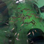 todi2 150x150 - Activiteiten - TODI  (Ontdek Je Stekje)